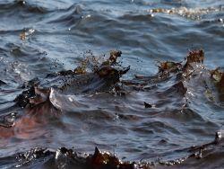 МПР планирует привлекать внебюджетные инвестиции для снижения загрязнений водных объектов
