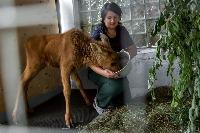 Богучанская ГЭС помогла устроить в зоопарк «Роев ручей» новорожденного лосенка