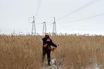 ФСК расчистит от зарослей камыша свыше 280 га трасс ЛЭП на Юге РФ