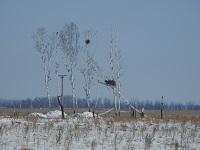Специалисты Амурских электросетей помогли установить искусственные гнезда для краснокнижных аистов